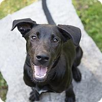 Adopt A Pet :: Simon - Drumbo, ON