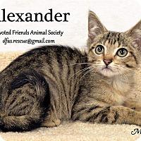 Adopt A Pet :: Alexander - Ortonville, MI