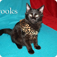 Adopt A Pet :: Brooks - Jackson, MS