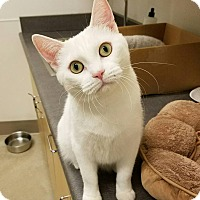 Adopt A Pet :: Alice Kingsleigh - Chicago, IL