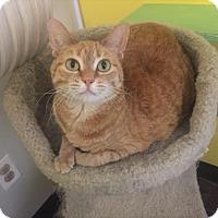 Adopt A Pet :: Sammie - West Des Moines, IA