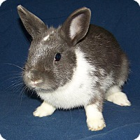 Adopt A Pet :: Magic - Alexandria, VA