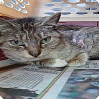 Adopt A Pet :: Mariah - Fort Lauderdale, FL