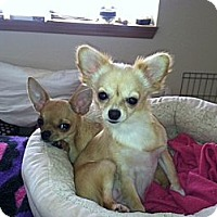 Adopt A Pet :: Penny and Jazzy - Everett, WA