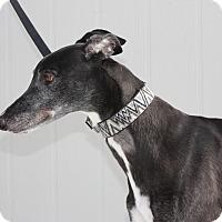 Adopt A Pet :: Toto - Orange County, CA