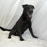 Labrador Retriever Mix Dog for adoption in Jackson, Mississippi - Benson