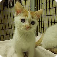 Adopt A Pet :: Private Benjamin - Medina, OH