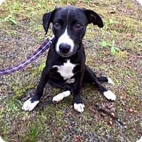 Adopt A Pet :: Evelyn - Marlton, NJ