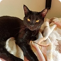 Adopt A Pet :: Juanita - Middletown, OH
