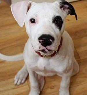 Retriever (Unknown Type) Mix Dog for adoption in Santa Fe, Texas - Kinley