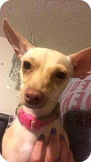 Chihuahua Mix Dog for adoption in Von Ormy, Texas - Peaches(PAW)