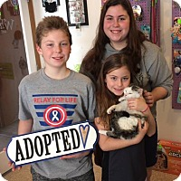 Adopt A Pet :: Jenson - Powell, OH