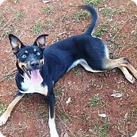 Adopt A Pet :: Faithe Herman - Jersey City, NJ