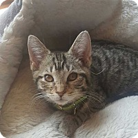 Adopt A Pet :: Candice - South Bend, IN