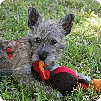Adopt A Pet :: Cosmos - Winters, CA