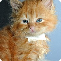 Adopt A Pet :: Pouf - Fort Leavenworth, KS