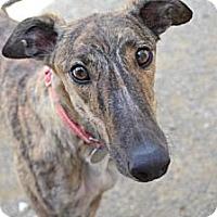 Adopt A Pet :: Ruby (FTK Rudeawakenin) - Chagrin Falls, OH