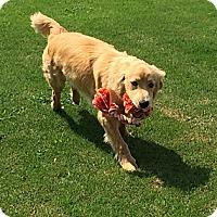 Adopt A Pet :: *Bradley - PENDING - Westport, CT