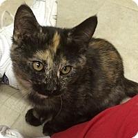 Adopt A Pet :: Bonnie - Ogallala, NE