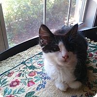 Adopt A Pet :: Sage - Monroe, GA