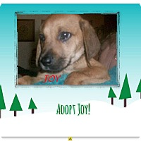 Adopt A Pet :: JOY - Ventnor City, NJ