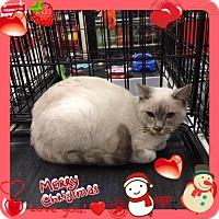 Adopt A Pet :: Crackle - Harrisburg, NC