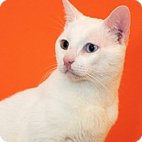 Adopt A Pet :: Catpuccino - Los Angeles, CA