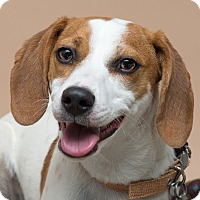 Adopt A Pet :: Ruby - Westfield, NY