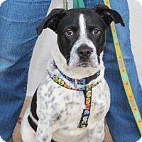 Adopt A Pet :: Jackpot - Media, PA