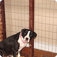 Adopt A Pet :: MoMo - North Myrtle Beach, SC