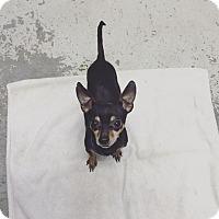 Adopt A Pet :: Tuesday - Chico, CA