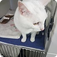 Adopt A Pet :: Alexander Quan - Indianapolis, IN