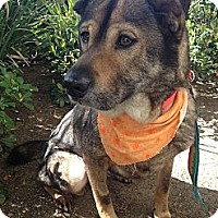 Adopt A Pet :: Angie - Mission Viejo, CA
