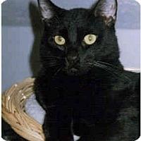 Adopt A Pet :: Rudy - Medway, MA