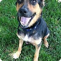 Adopt A Pet :: Lolli - Marlton, NJ