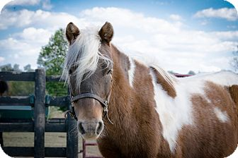 Pony - Other Mix for adoption in Nicholasville, Kentucky - Ranger