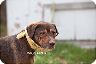 Labrador Retriever/Hound (Unknown Type) Mix Dog for adoption in Reed City, Michigan - CHARLIE