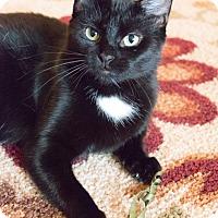 Adopt A Pet :: Dream Catcher - Chicago, IL