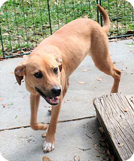 Retriever (Unknown Type) Mix Dog for adoption in Umatilla, Florida - Kelly