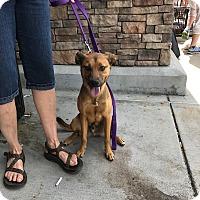 Adopt A Pet :: Rex - Hohenwald, TN