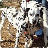 Adopt A Pet :: Tyson - Newcastle, OK