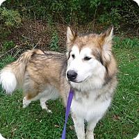 Adopt A Pet :: Miranda - Augusta County, VA