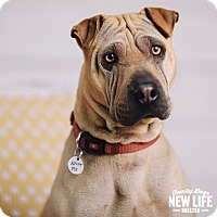 Adopt A Pet :: Sandy - Portland, OR