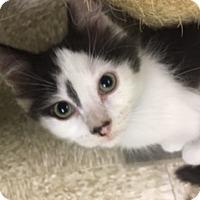 Adopt A Pet :: Marvin - Medina, OH