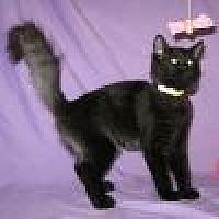 Adopt A Pet :: Kuro - Powell, OH