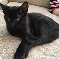 Adopt A Pet :: Uno - McHenry, IL