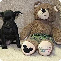 Adopt A Pet :: Coleman - Salem, NH