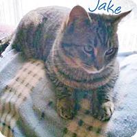 Adopt A Pet :: Jake (Brothers) - York, PA