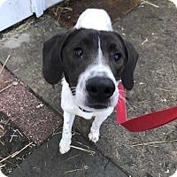 Adopt A Pet :: Tony - Sparta, NJ