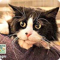 Adopt A Pet :: Magic - Oakville, ON